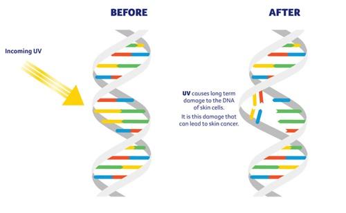 UV-damages-DNA-1024x633